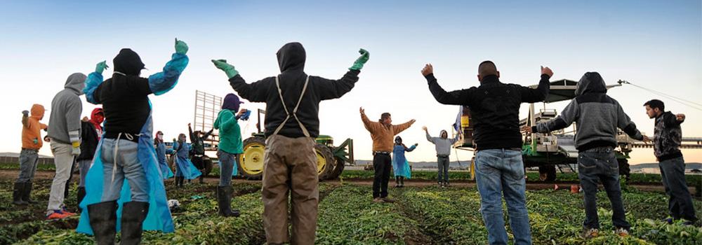banner-farm