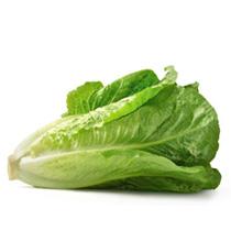 Romaine (Organic)